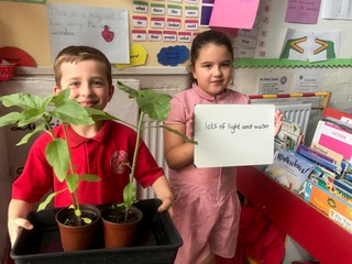Year 1 Sunflower Experiment 4
